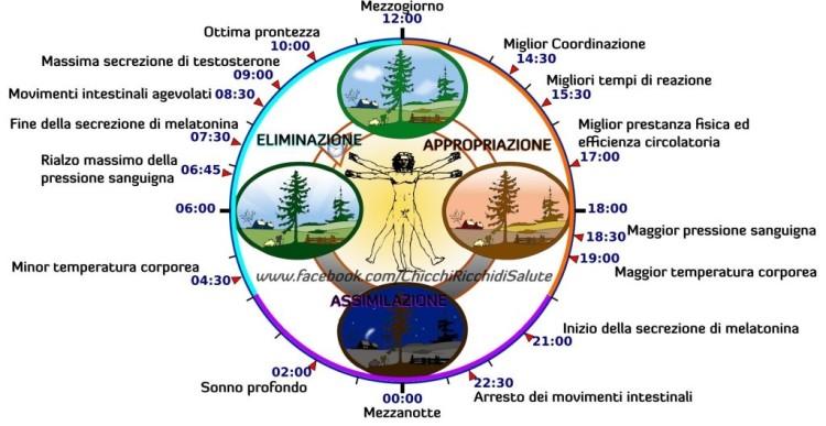 ciclo 24h