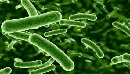 lactobacillus-rhamnosus-ff074de4-d425-468f-9782-f751c039158-resize-750