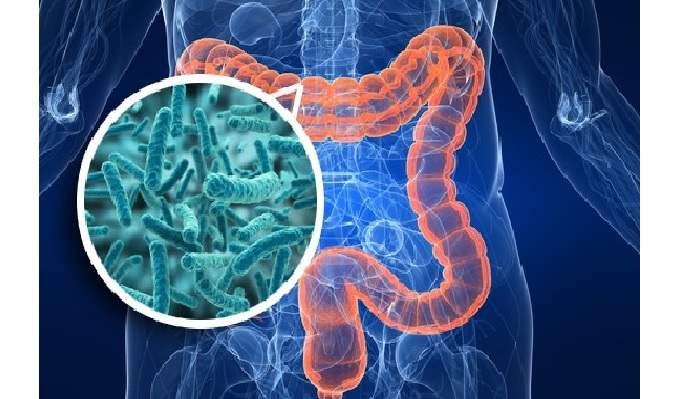 probiotici-prebiotici